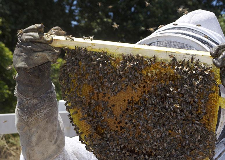 včelař