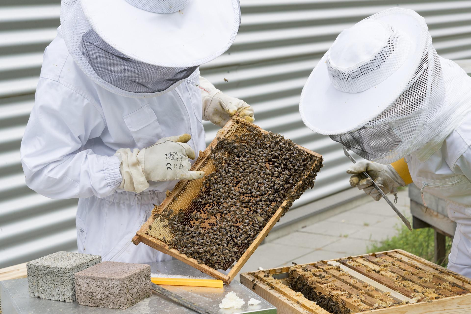 beekeeper-2650663_1920