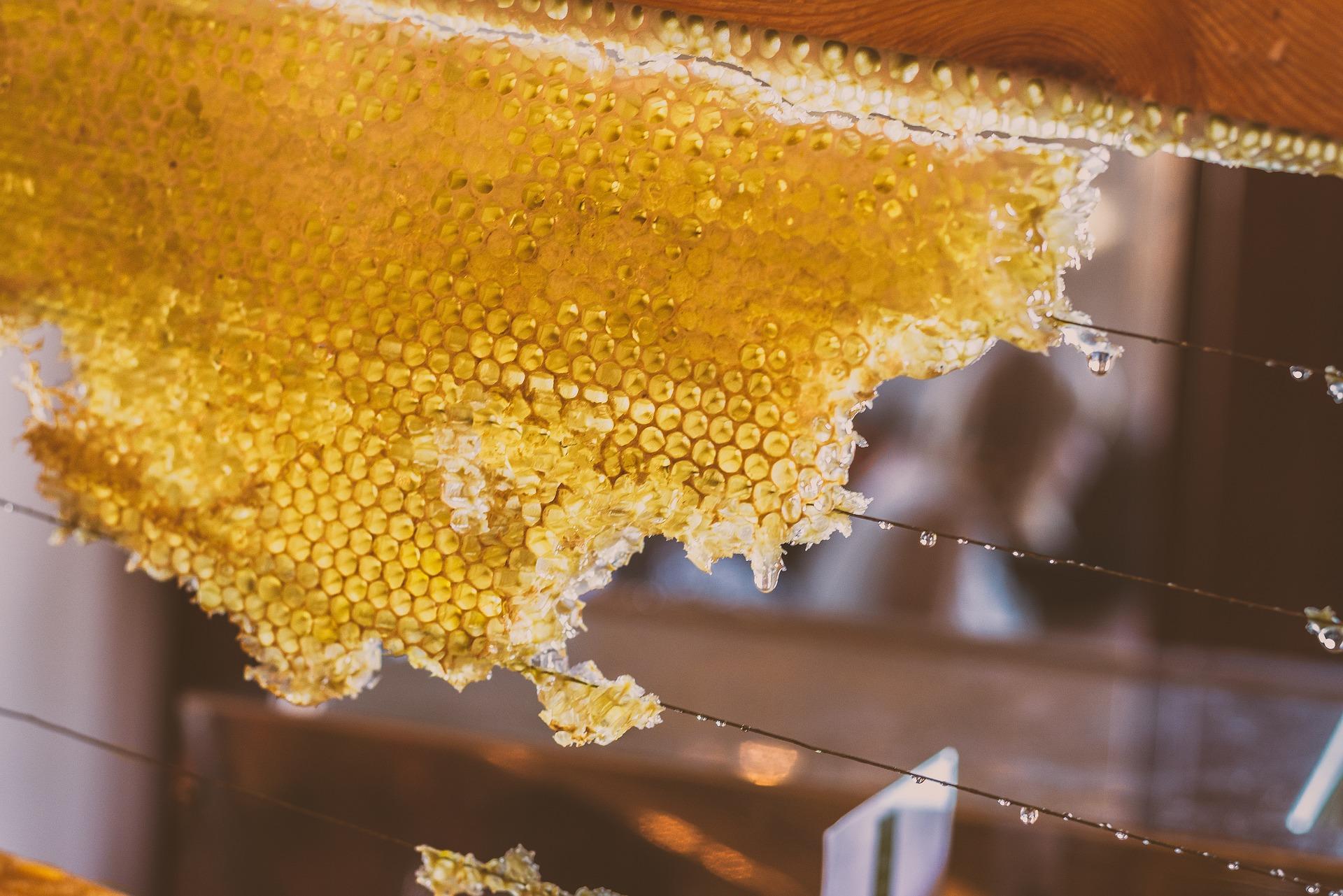honey-2595679_1920
