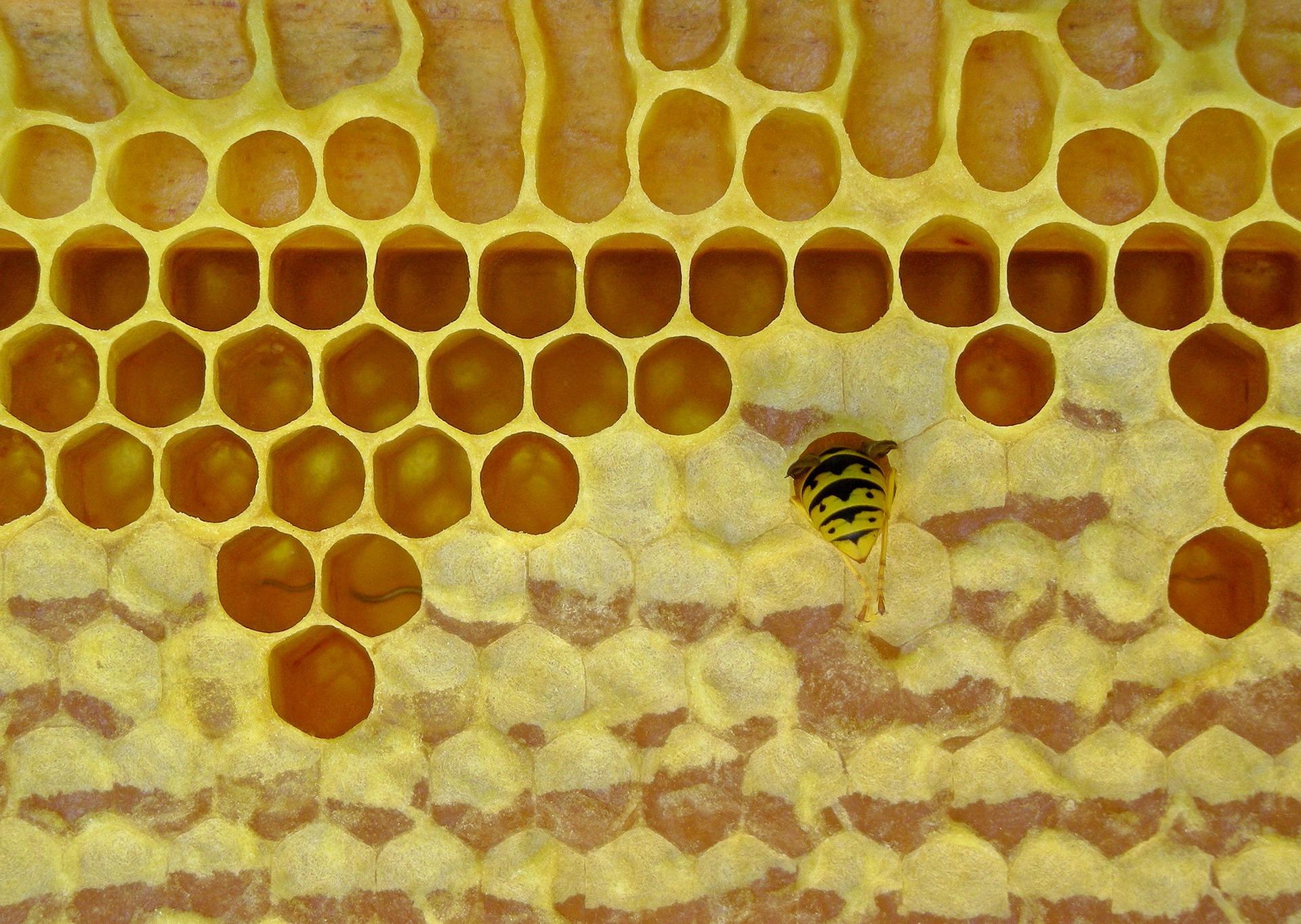honeycomb-2755409_1920